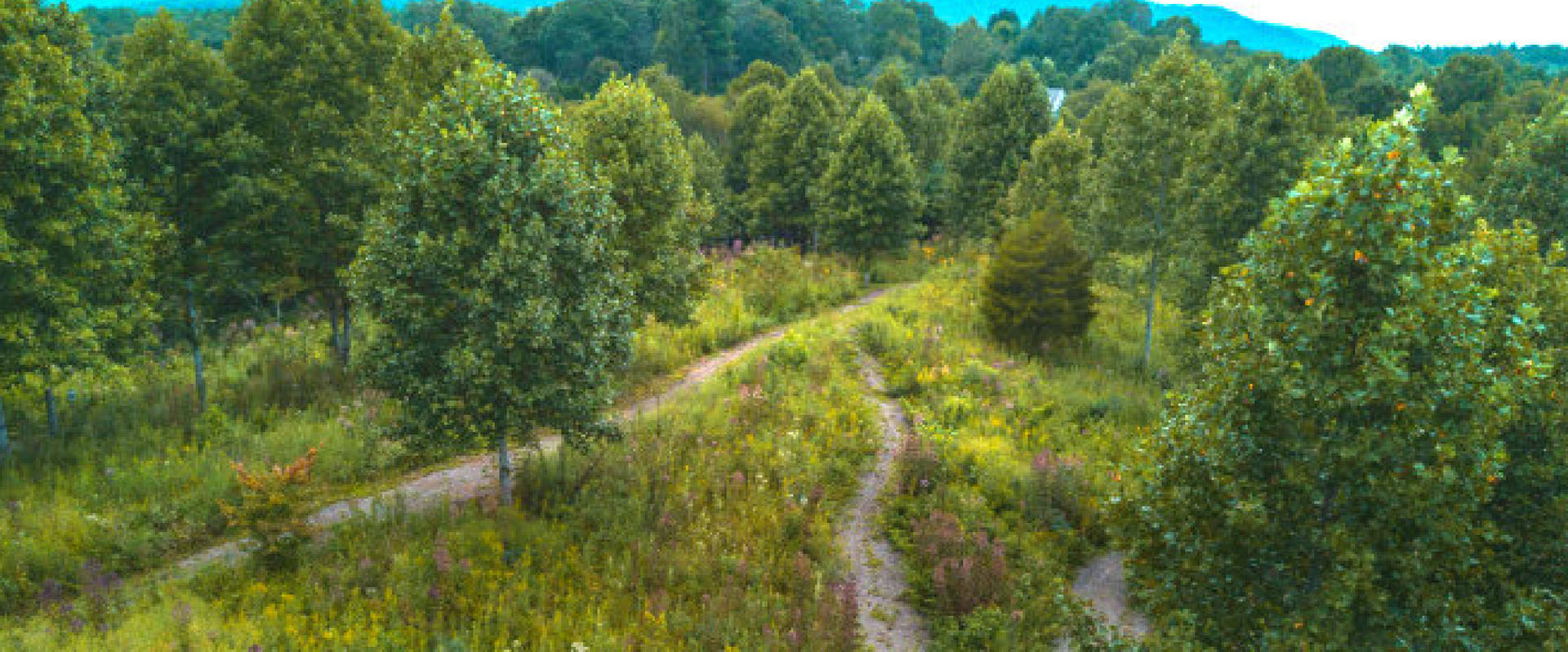 Natural burial ground in North Carolina, US.